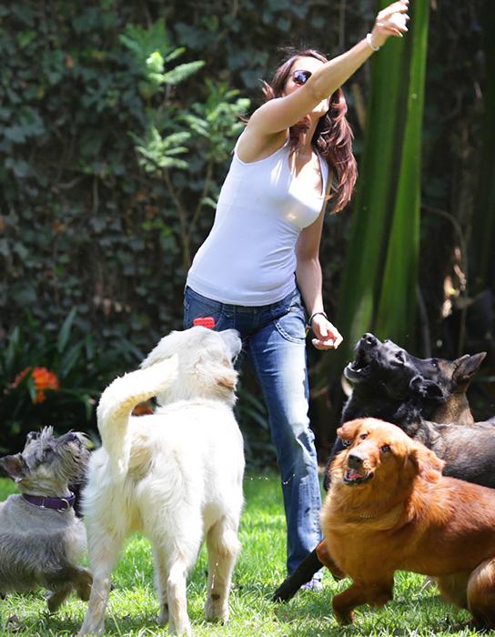 La importantancia de la socialización canina