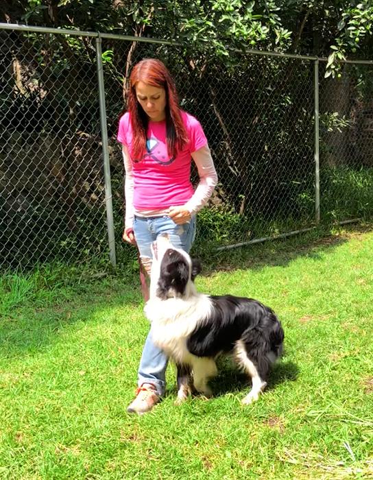 Beneficios de tener un perro adiestrado