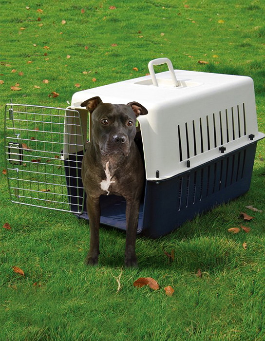 El uso de jaulas para perros