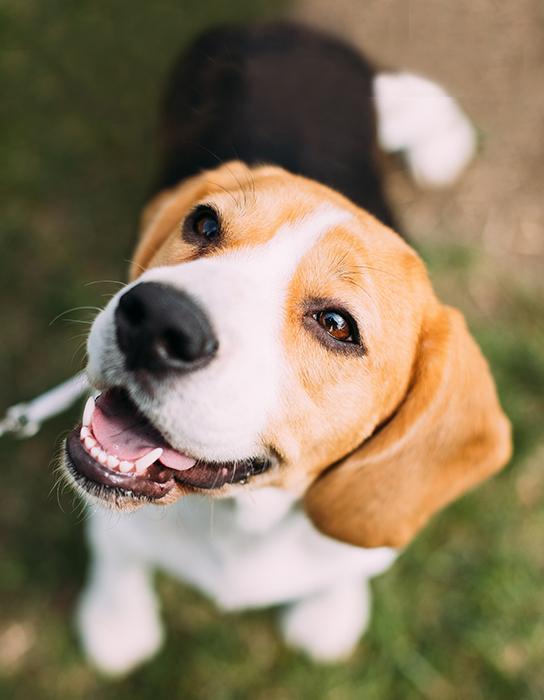 La inteligencia en nuestro perrito