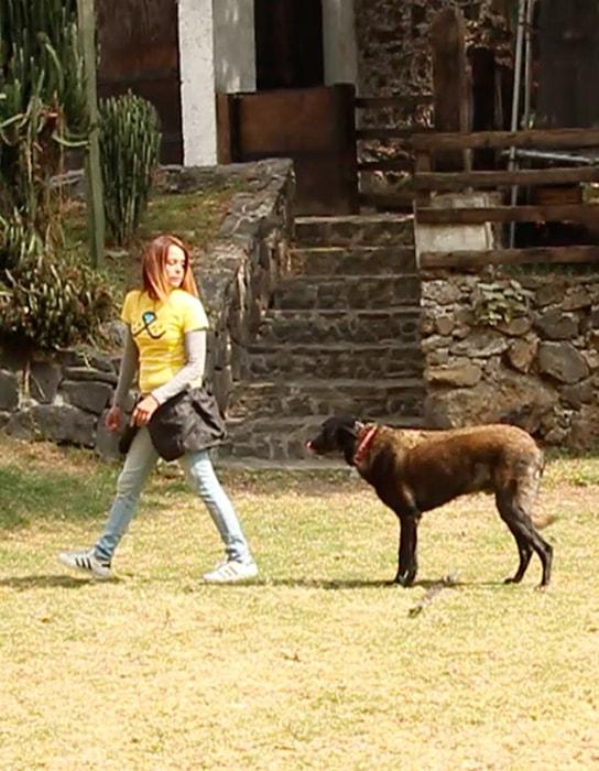 La psicología en el adiestramiento canino